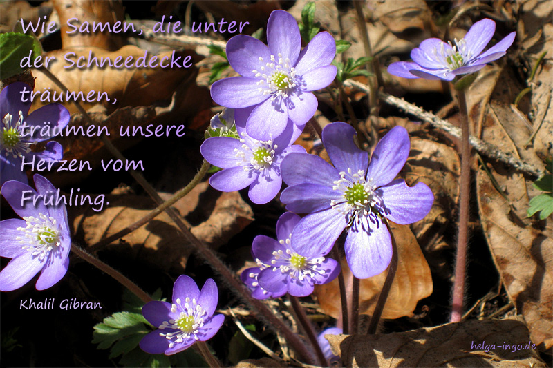 Frühlingsstein